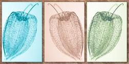 Seeds Triptych-LR.jpg