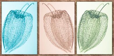 Seeds Triptych