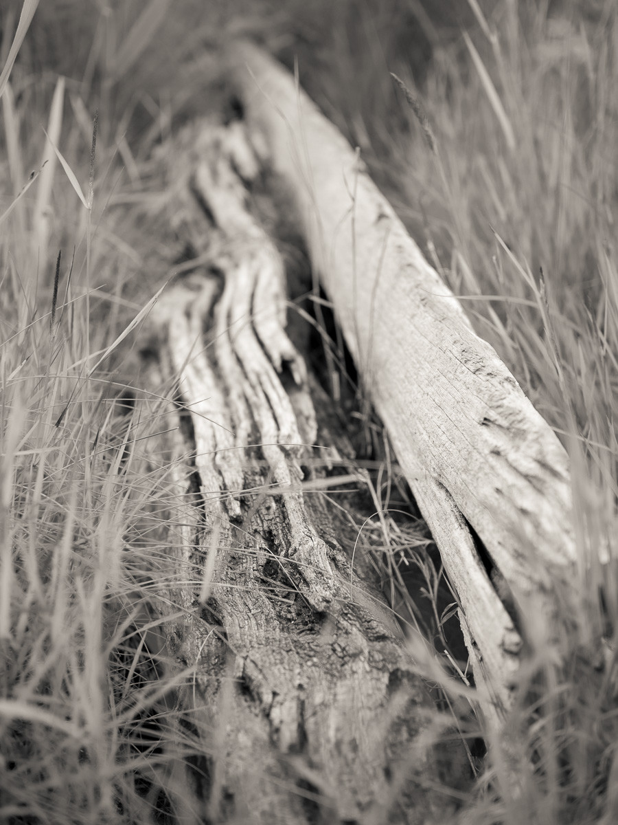 Bleached driftwood lying amongst spiky grasses in long-abandoned harbour