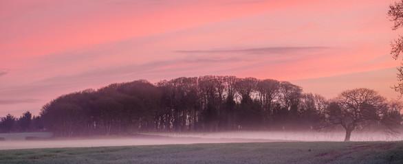 Trewithen Dawn