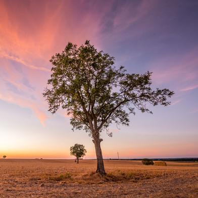 Walnut Tree Field