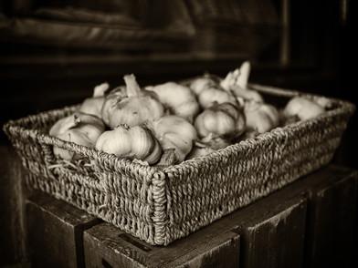 Sepia Toned Garlic