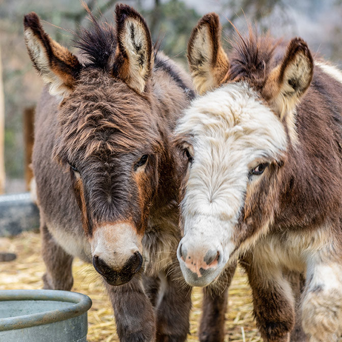 Alma Bonita Farm Tour