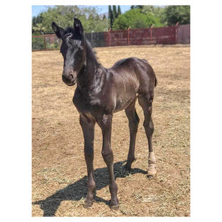 Foal's First Vet Visit