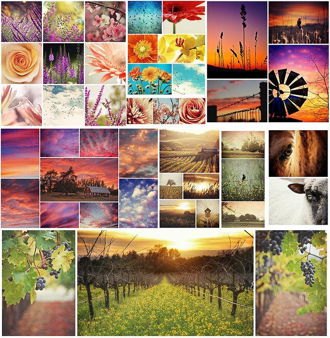 mega collage.jpg