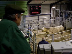 DoneDeal moo-ves fast to help Cattle farmers trade online.
