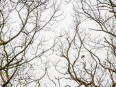 Veenhuizen Woodpecker