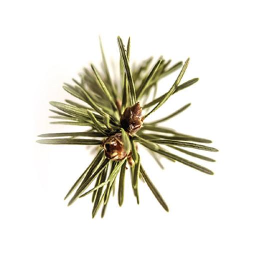 Pinecone Fibonacci