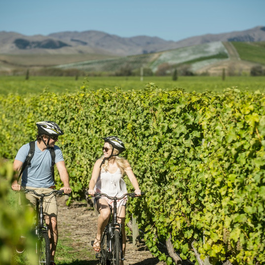 Biking Vines Marlborough