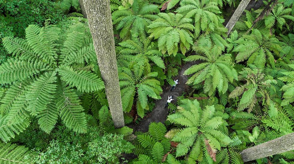 EX23-The-Redwoods-Rotorua-Graeme-Murray_