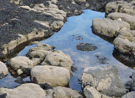 rock-pool.jpg