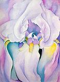 Georgia_O'Keeffe,_Light_Iris,_1924.jpeg