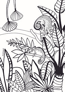 Camaleones.jpg