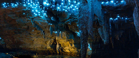 Waitomo cave Tour