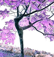 'L'arbre_qui_dance'_sur_Ziblog_-_en_néga