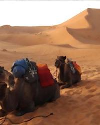 Wüste.PNG