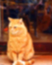 rote Katze.jpg