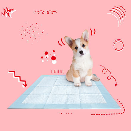 index dogs-02.jpg