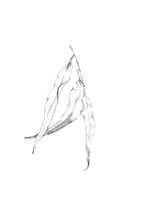Digital Print - Gum Leaf #1