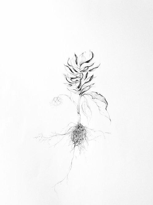 Digital Print - Pocket Full of Roots