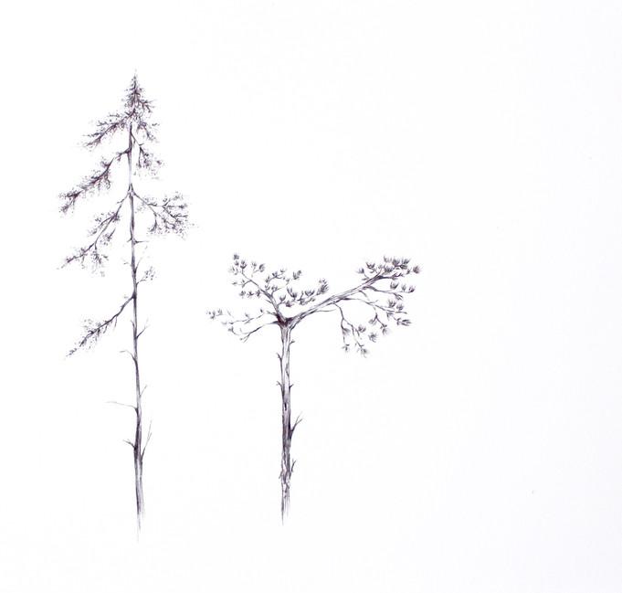 Finnish forest textures