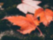 Orange maple leaf on ground