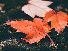 Folhas vermelhas
