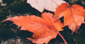 Stretching Before Raking Fall Leaves