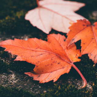 Fall Checklist for your Landscape