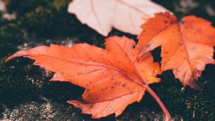Maintenant que les feuilles tombent...