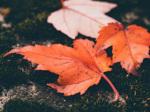 røde blade