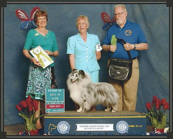 "RBIS MBISS GCHG Jana Armitage Freelance, ""Rooney"", Reserve Best In Show, Northeastern Maryland KC"
