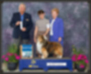 GCH CH Jana Ticket To Ride - Select Dog - Trumbull County KC