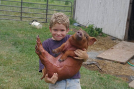Holding Red Wattle Piglet