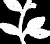 RUSTIC-MEADOW-FARMS-flower-illustration.