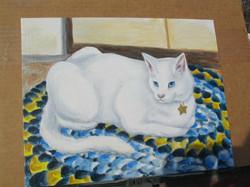 My White Persian