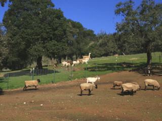 Meeting Isabella Regusci in Napa, CA (Part 2)
