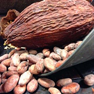 Cacao pod & cacao beans