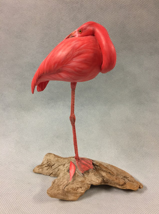 Miniature Flamingo