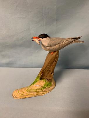 Miniature Common Tern