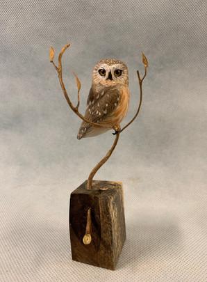 Miniature Saw-Whet Owl