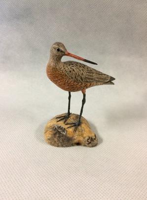 Miniature Hudsonian Godwit