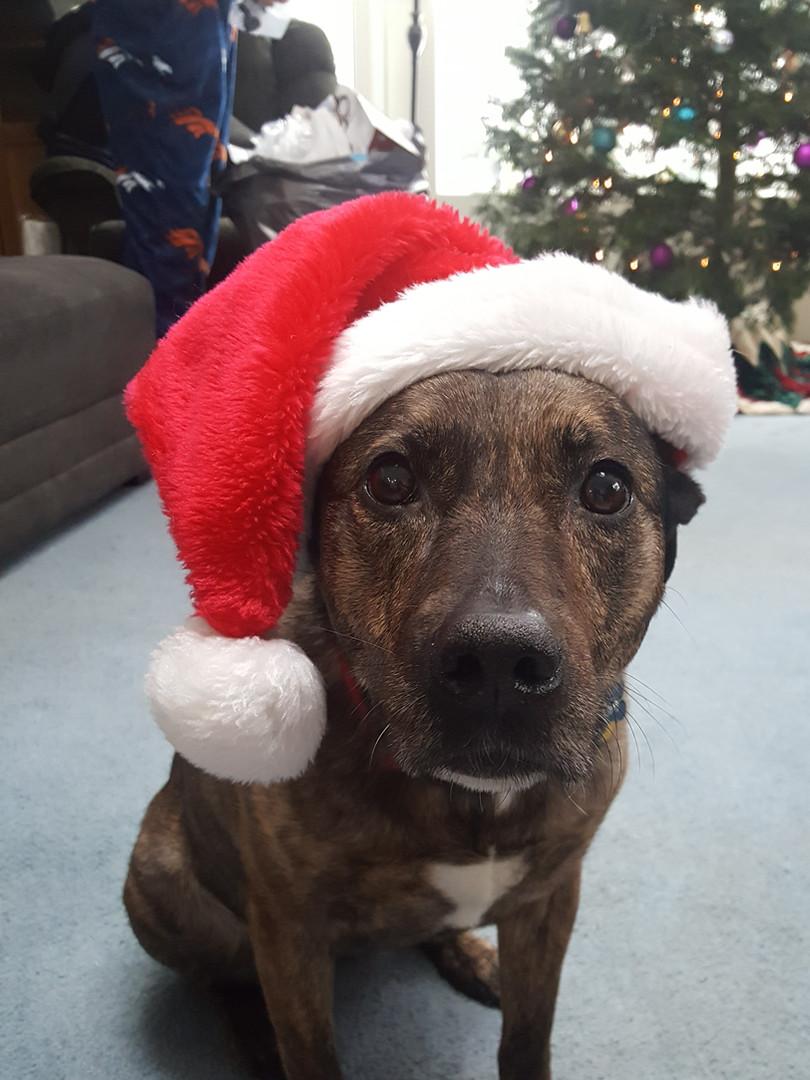 Dog Chloe.jpeg