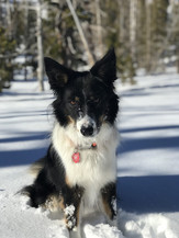 Dog Alaska.jpg