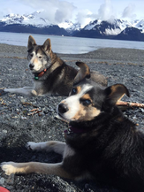 Dogs Kashi and Tsuga.png