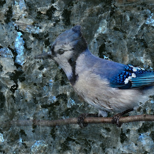 Blue Pearl Granite with blue jay 02.jpg