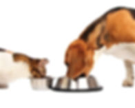dog-cat-feeding.jpg