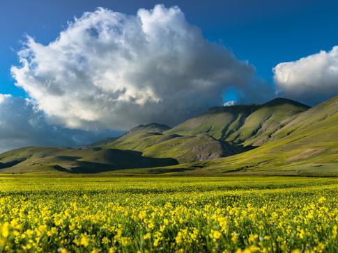 lentil fields / Linsenfelder