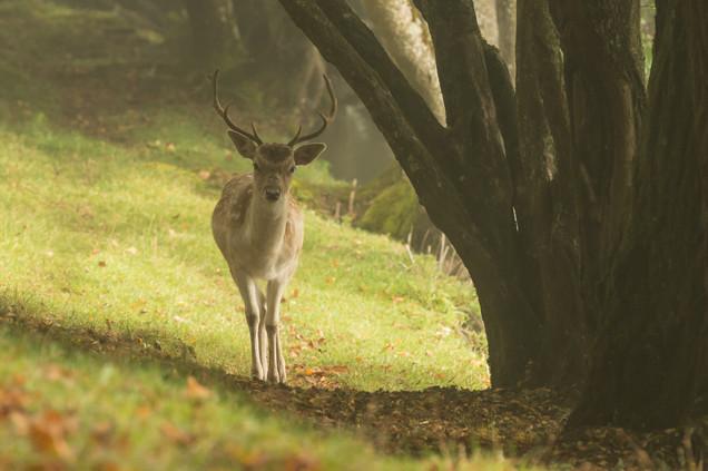 encounter in the fog