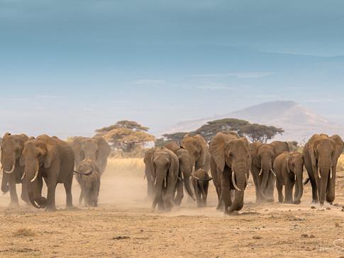 elephant familiy